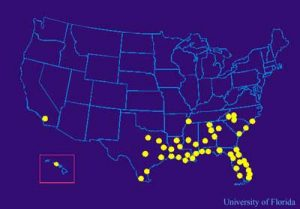 Pensacola Termite Control