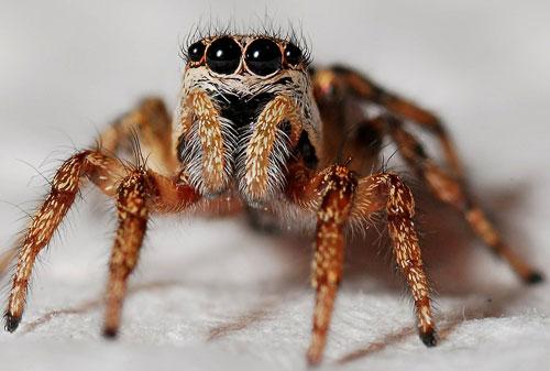 Pensacola Spider Exterminator
